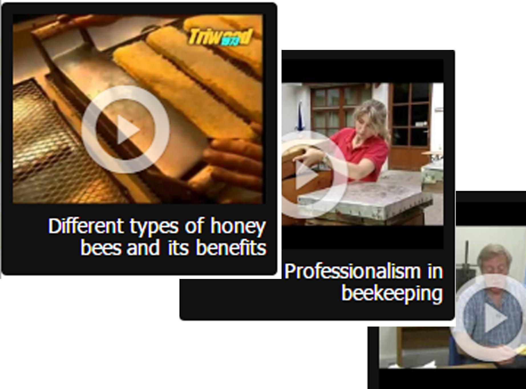فيديو النحل - باللغة الإنجليزية