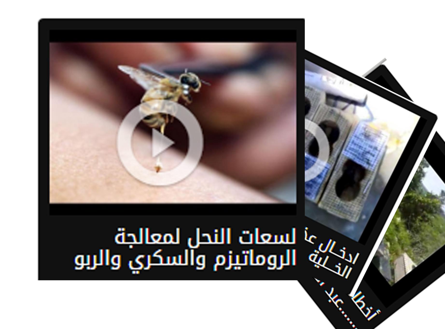 فيديو النحل - باللغة العربية